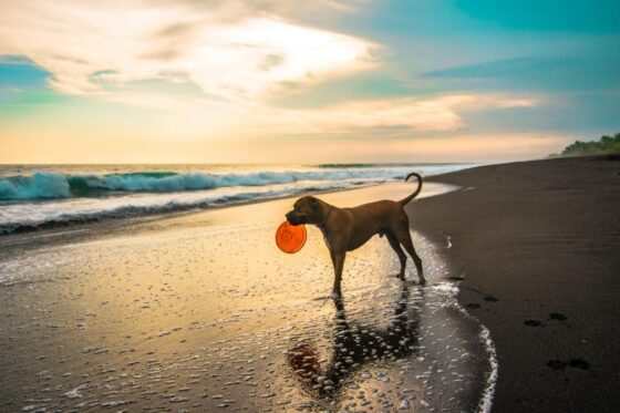 Games To Play With Your Dog – Outdoor And Indoor