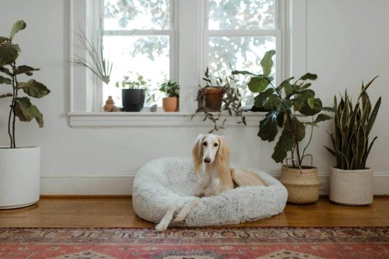 Effective Tips For Dog Bed Cleaning