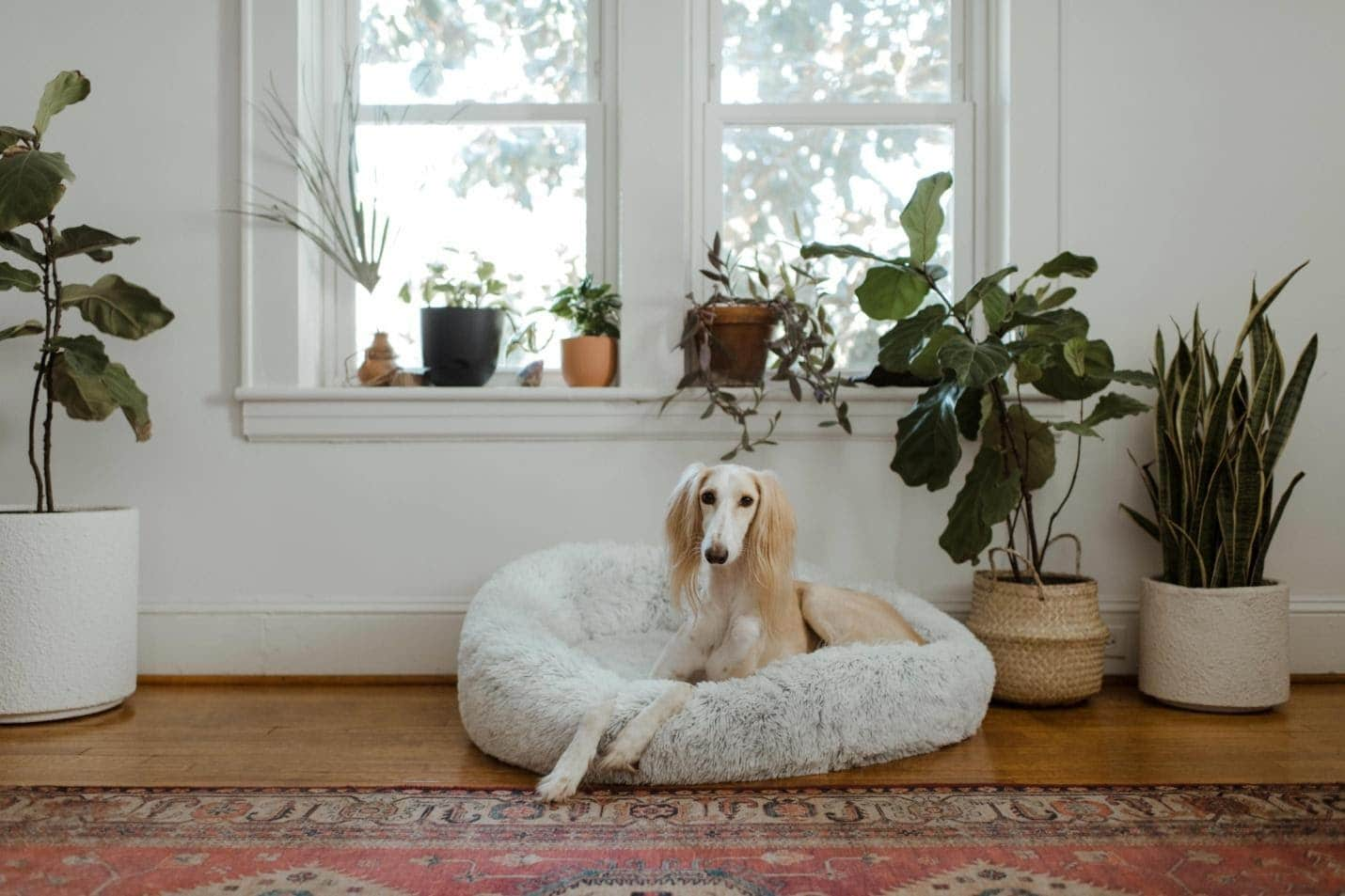 effective-tips-for-dog-bed-cleaning