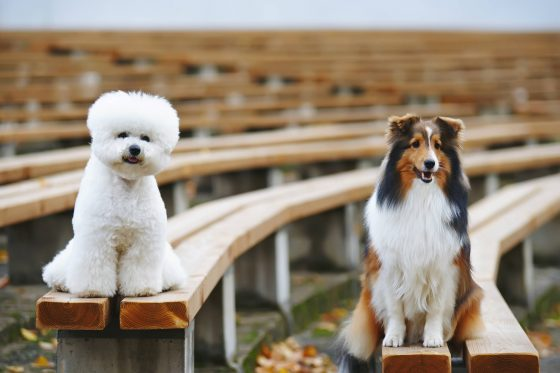 How To Stop A Dog From Barking? A Complete Guide